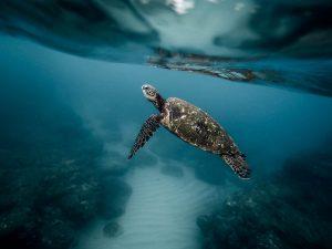 Living Galapagos